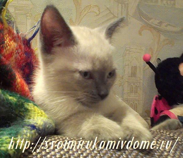 Котёнок болеет. Грустная история про котёнка Самсона