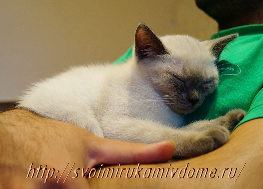 Котёнок спит. Грустная история про котёнка Самсона