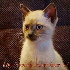 Котёнок. Грустная история про котёнка Самсона