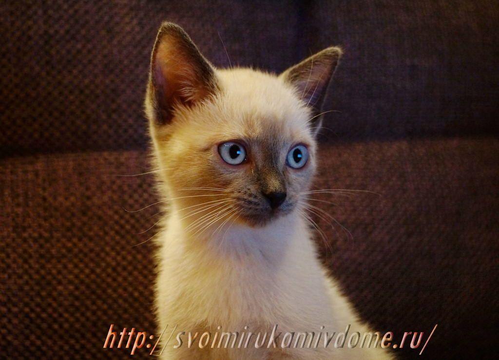 Котик. Грустная история про котёнка Самсона