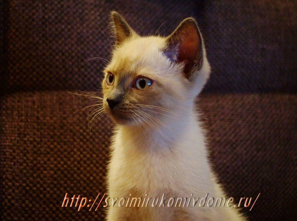 Любопытный котёнок. Грустная история про котёнка Самсона