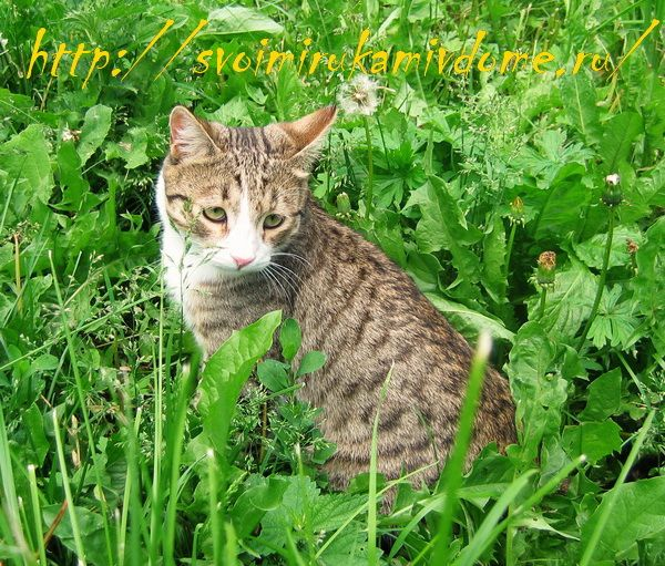 Кот Фомка гуляет