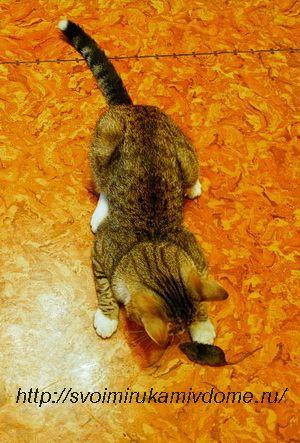 Кот Фомка с мышкой