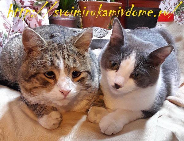 Коты Фомочка и Мурзик