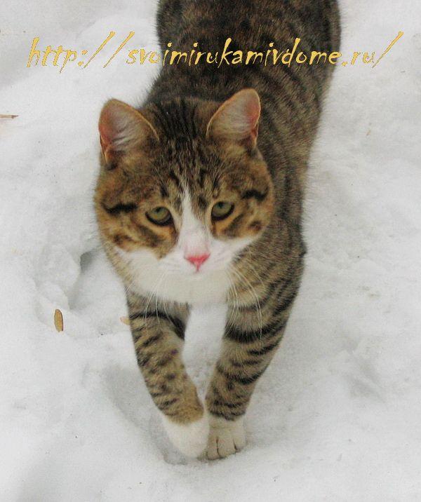 Кот Фомка на снегу