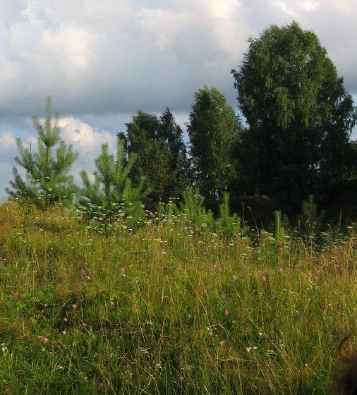 Природа, травы, деревья