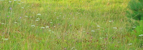 Травы летом
