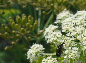 Лето на грядке, жуки