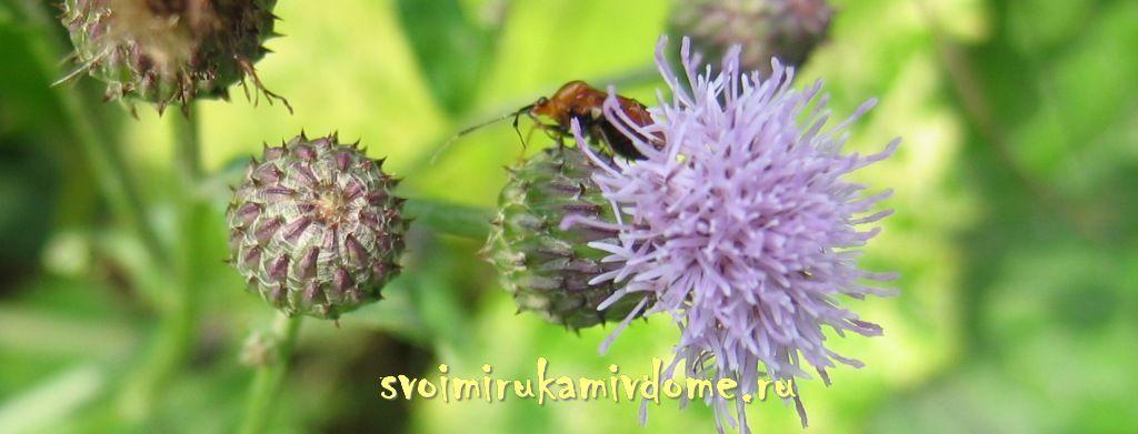 Растения и насекомые
