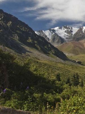 В горах, разнотравье, вершины