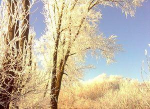 Зима, тополя