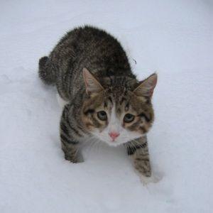 Котёнок на снегу, зима