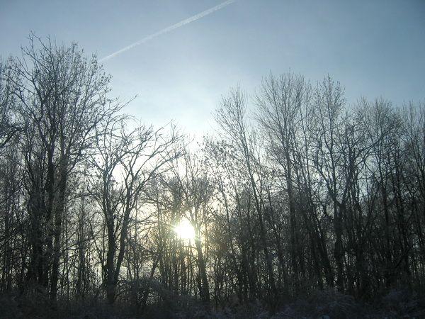 У дороги деревья, январь