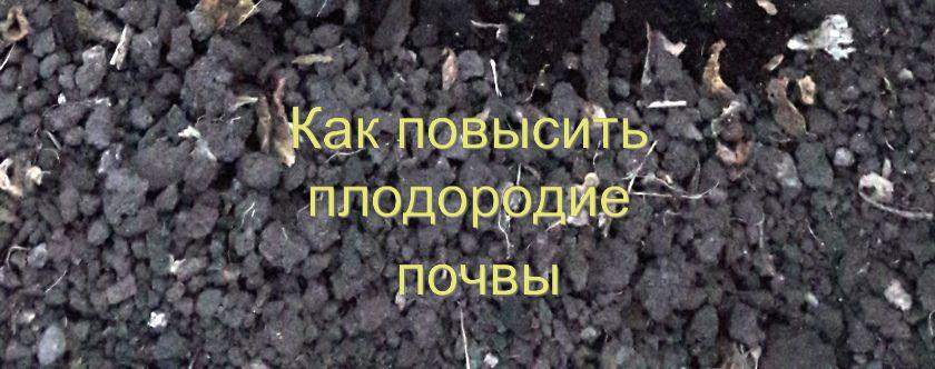 Повышение плодородия почвы на участке
