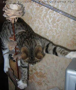 кот и гимнастика
