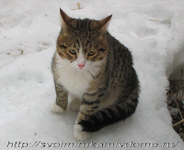 кот не понял