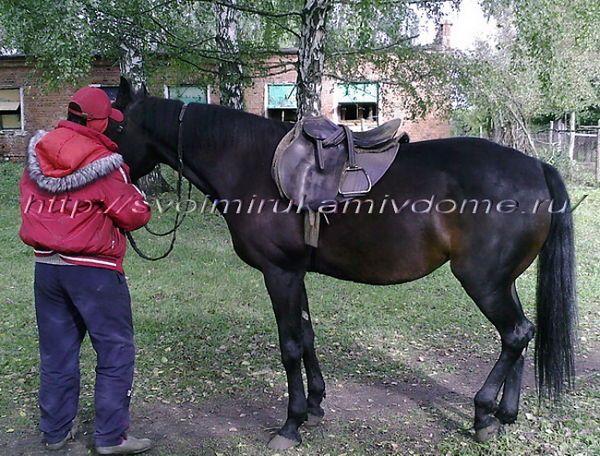 Подготовка лошади к работе