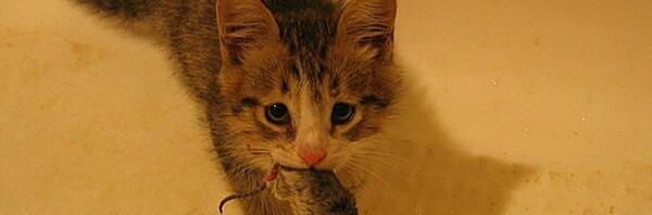 Рассказ про котёнка