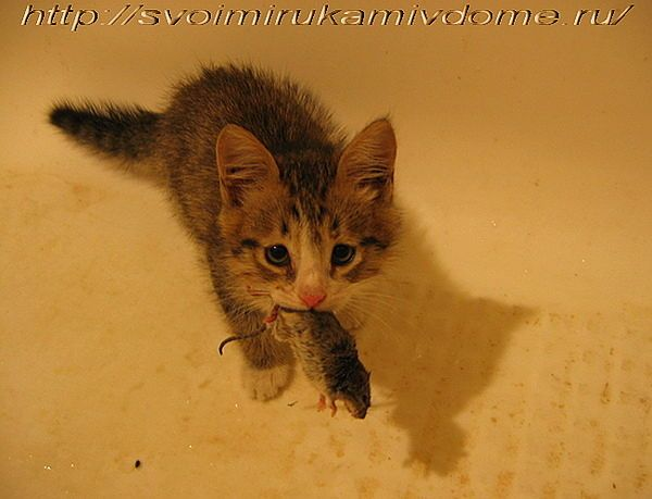 В 2 месяца мышка