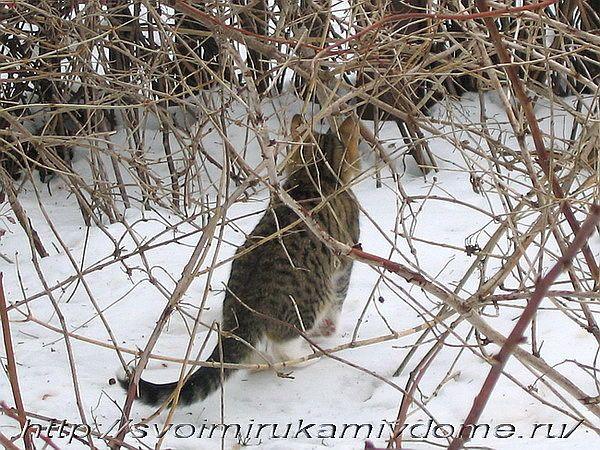 Кот смотрит за забор