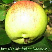 Яблоко, чай из фруктов
