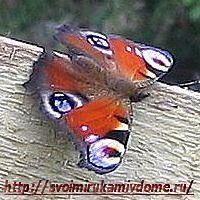 Бабочка на стройке