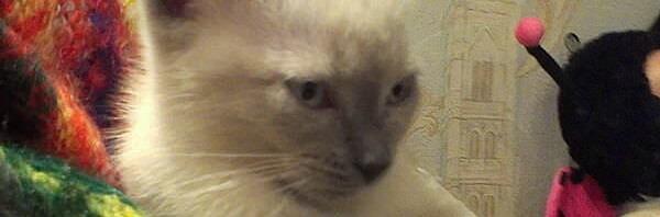 Грустная история про котёнка Самсона
