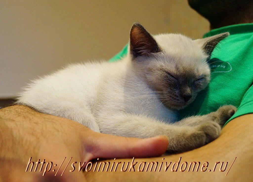 Котёнок спящий