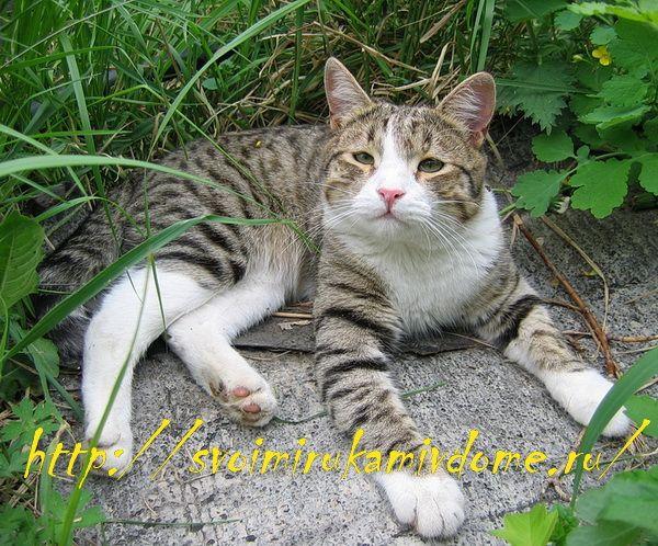 Кот Фомка летним днём