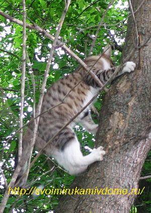 Кот слезает с дерева