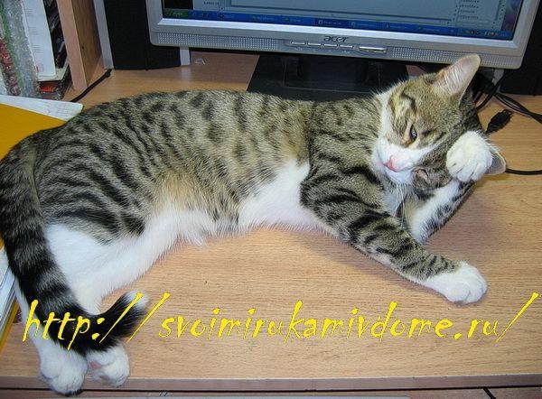 История про кота Фомку