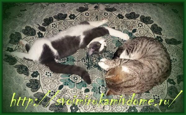 Фомочка и Мурзик на кровати