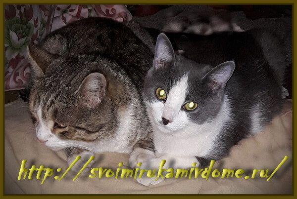 Мурзик и Фомочка отдыхают
