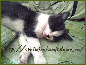 Мурзик маленький спит