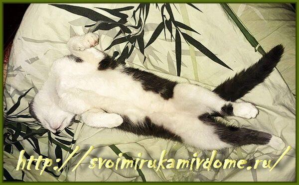 Мурзик спит на кровати