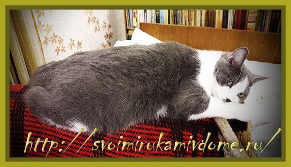 Мурзякин лежит на спинке кресла