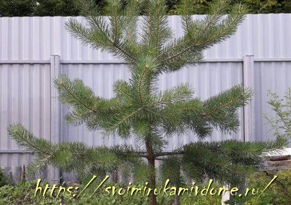 Забор из профнастила со стороны дома