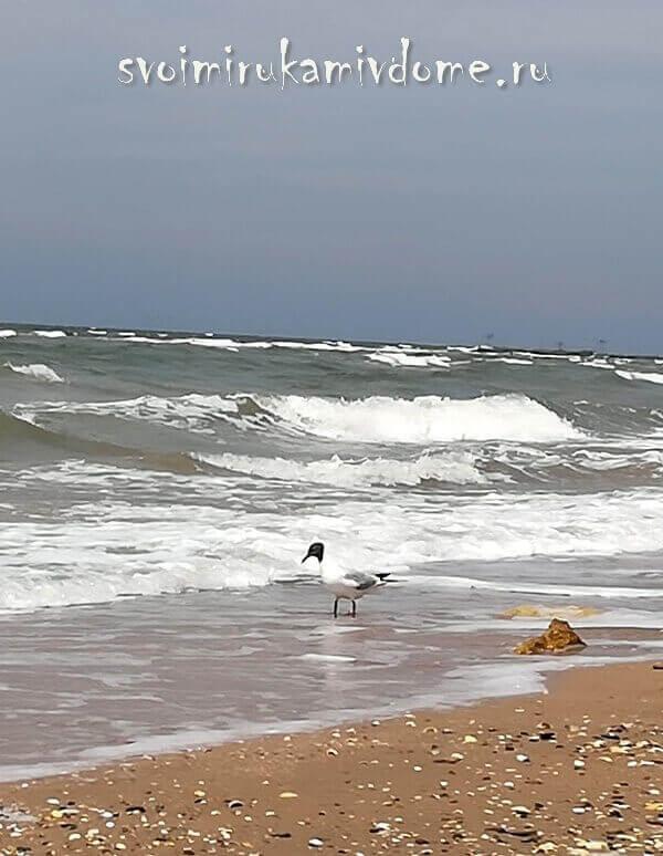 Чайка на берегу Азовского моря