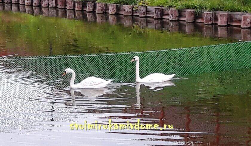 Лебеди на реке Упе