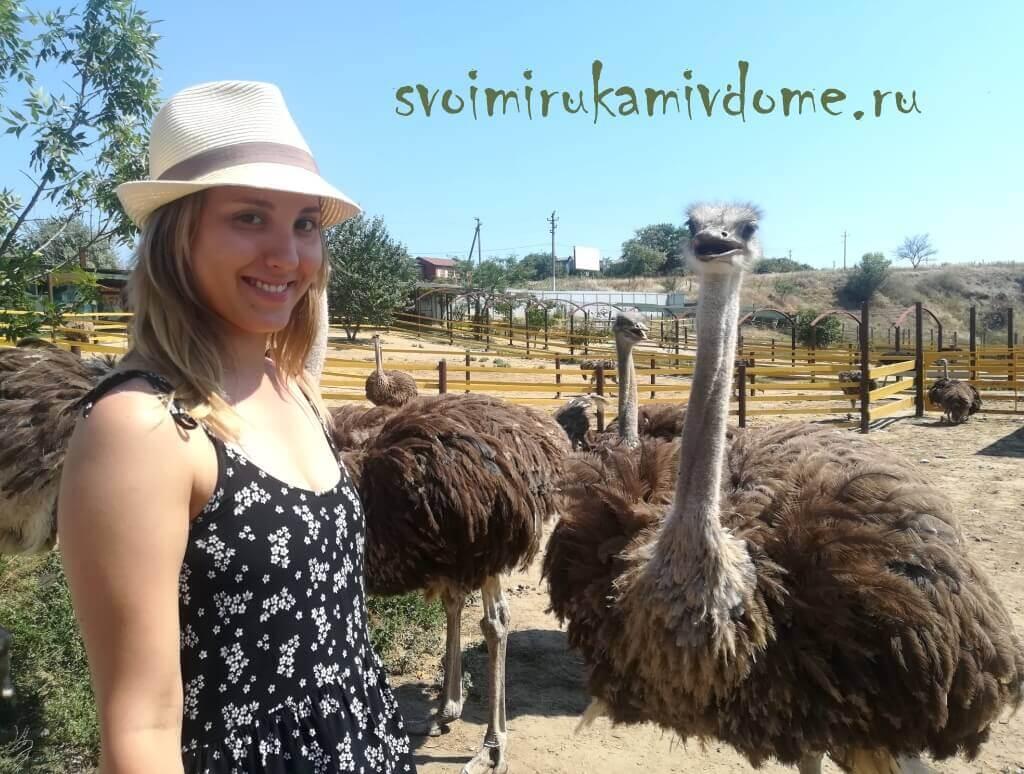 На страусиной ферме, Азовское море