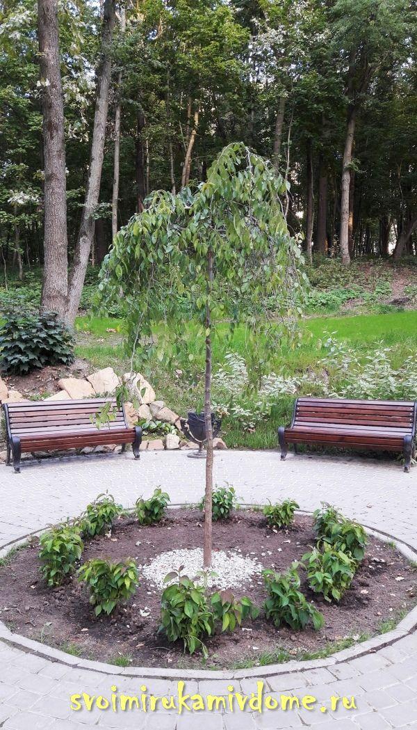 Деревце на перекрестье дорожек в парке