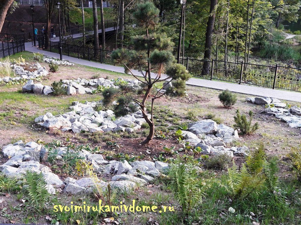 Хвойные растения и камни в парке