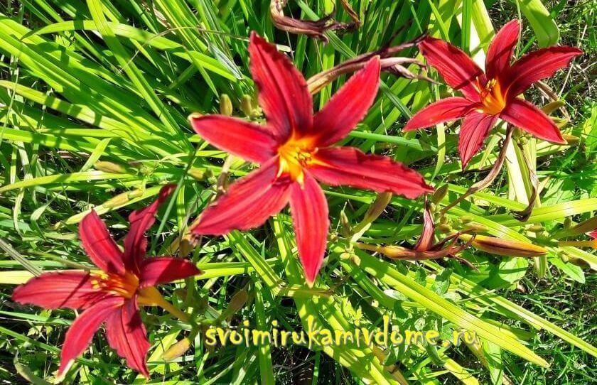 Цветы из бисера - розы из бисера, лилия из бисера
