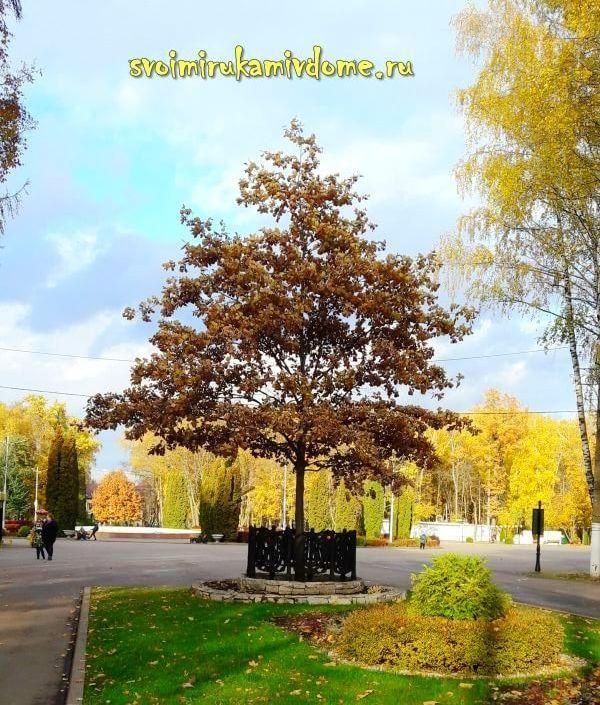 Вид на площадь с фонтаном в парке