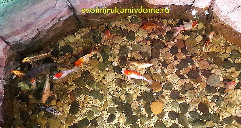 Рыбки в бассейне экзотариума Тулы