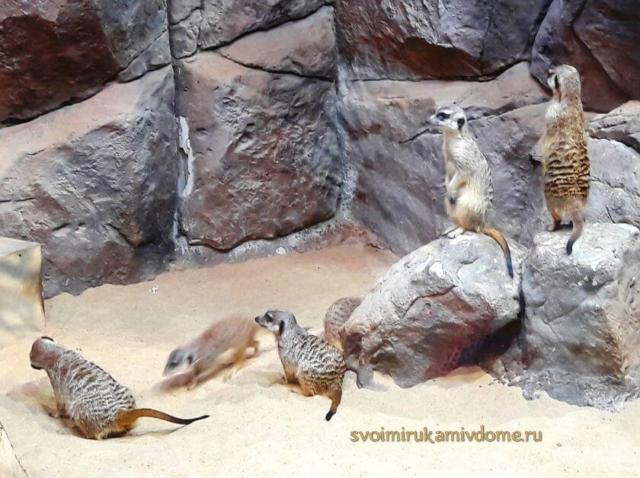 Сурикаты в Тульском экзотариуме