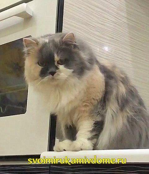 Кошка Мона на кухне