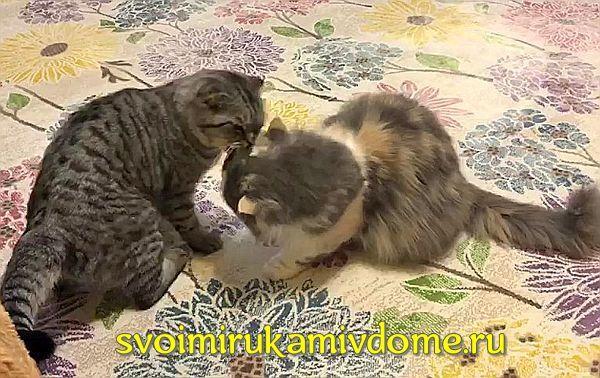 Кошки на ковре перед броском