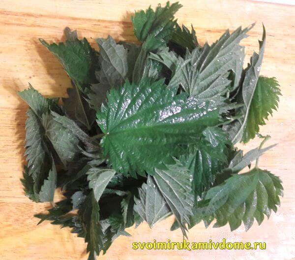 Листья крапивы для щей зелёных